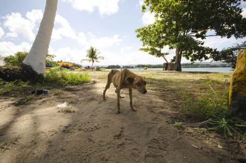 sophie_gamand_dead_dog_beach_18_coultique