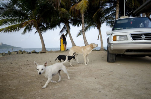 sophie_gamand_dead_dog_beach_23_coultique