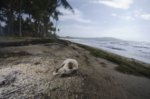 sophie_gamand_dead_dog_beach_26_coultique