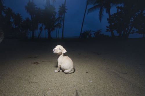 sophie_gamand_dead_dog_beach_front_coultique