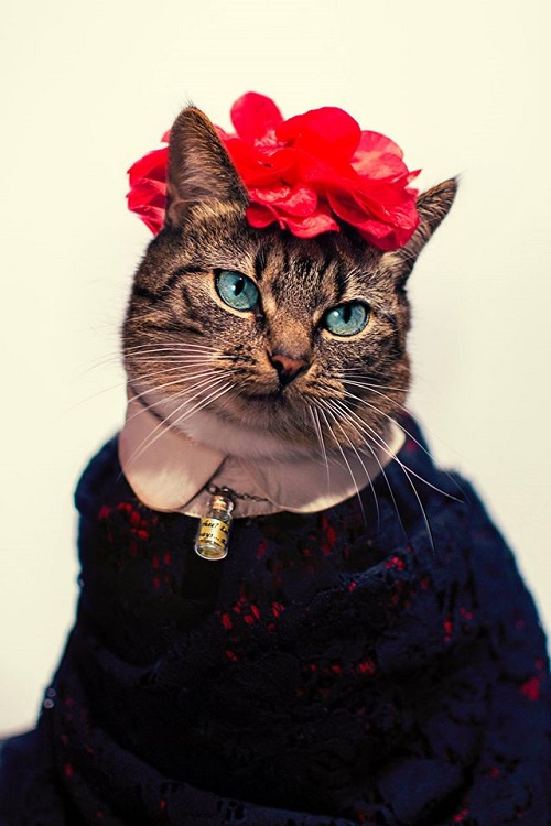 jason_mcgroarty_cat_couture_11_coultique