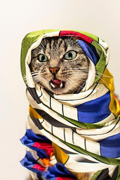 jason_mcgroarty_cat_couture_13_coultique