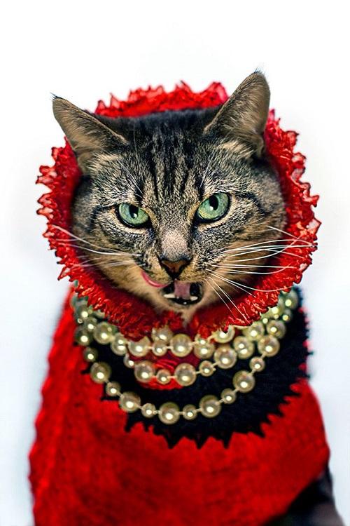 jason_mcgroarty_cat_couture_2_coultique