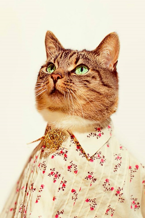jason_mcgroarty_cat_couture_4_coultique