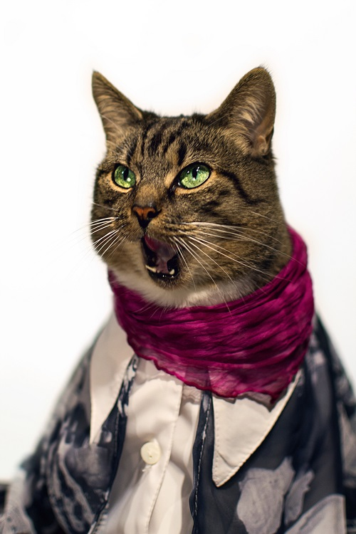 jason_mcgroarty_cat_couture_6_coultique