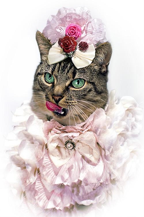 jason_mcgroarty_cat_couture_7_coultique