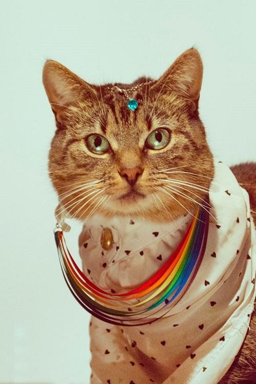 jason_mcgroarty_cat_couture_9_coultique