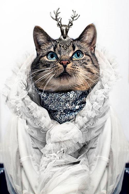 jason_mcgroarty_cat_couture_front_1__coultique