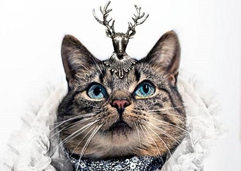 jason_mcgroarty_cat_couture_front_coultique